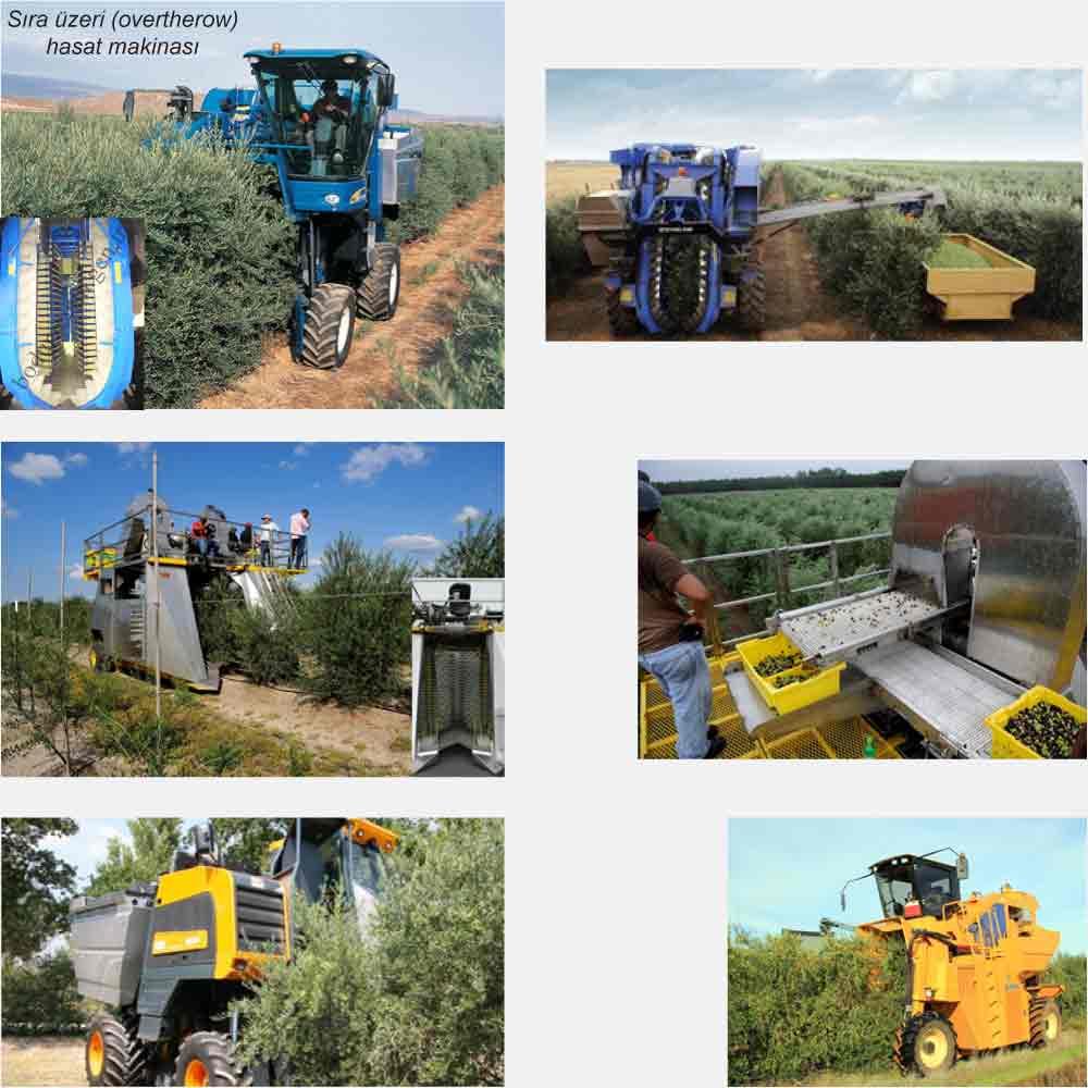 bodurzeytin-hasat-makinası